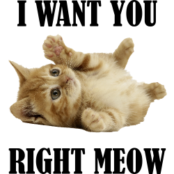 I Want You Right Meow