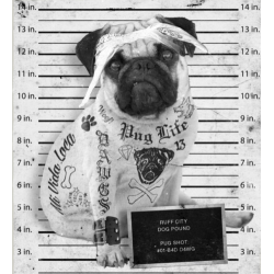 Pugs Life